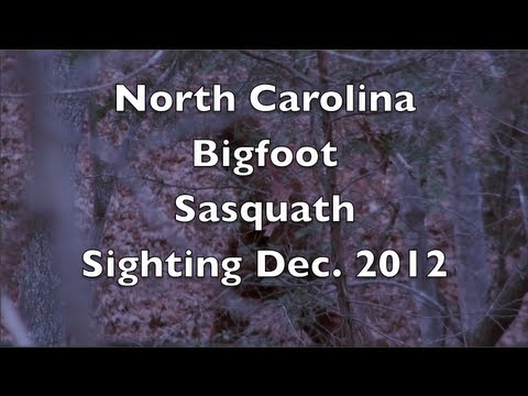 Bone-chilling Bigfoot Sighting While Hunting