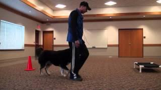 Nonton Bailey  Tibetan Mastiff  Boot Camp Level Iii  Dog Training Minnesota Film Subtitle Indonesia Streaming Movie Download