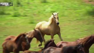 Pferdemagazin dreht Rasseportrait Paso Iberoamericano am Vogelstockerhof