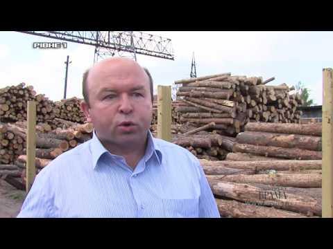 Рівненські лісівники судитимуться з митниками через... дрова [ВІДЕО]