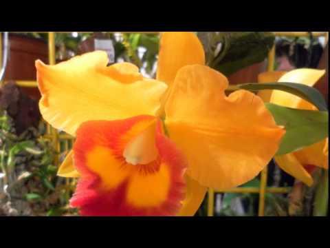 Orchideen Pflege: 10 krasse Irrtümer bei der Pflege ...