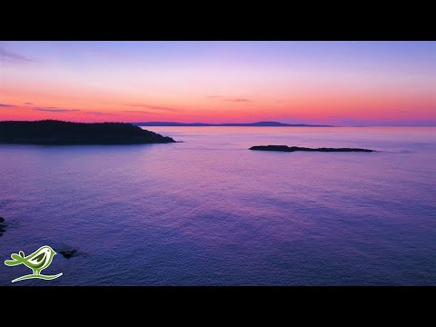 Relaxing Sleep Music - Stress  …