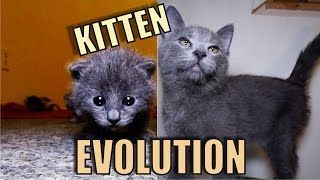 Kitten Evolution - The Gibbyson