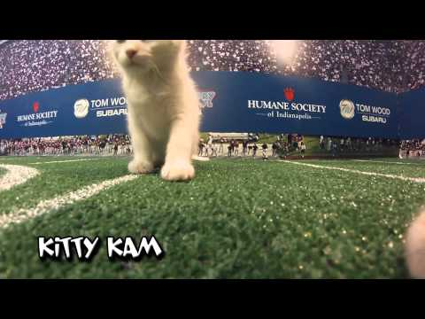 Tom Wood Subaru Puppy Bowl 2014