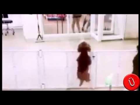 il cane si ferma in strada, sente la musica e balla!