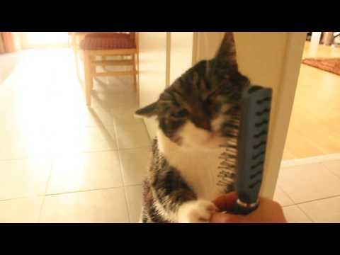 Il gatto si spazzola da solo