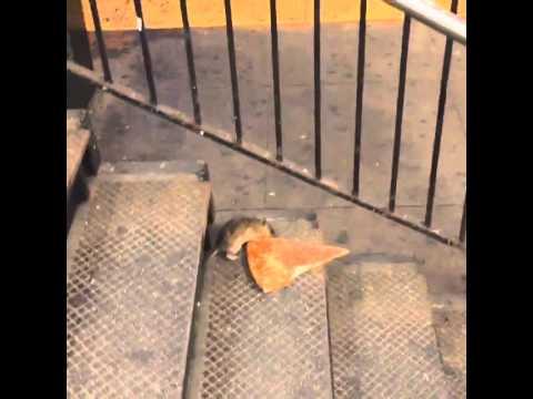 #PizzaRat, il topo con la pizza sulla metro di New York star del web