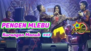 Video PERCIL Cs - 9 DESEMBER 2018 - ORKES - Polehan Blimbing Malang MP3, 3GP, MP4, WEBM, AVI, FLV Desember 2018