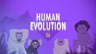Human Evolution (Crash Course Big History 6)