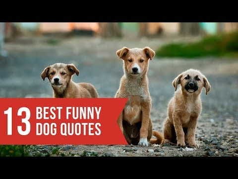 Cute quotes - Funny dogs and dog quotes
