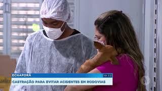 Concessionária castra  animais de graça na rodovia Marília- Echaporã