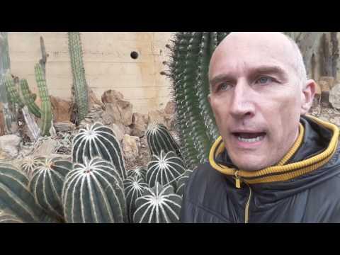 come riprodurre i cactus tramite seme