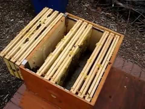 Backyard Beekeeping Part 22 Spring Management