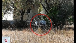 Rescue of a neglected donkey found abandoned in a field by The Orphan Pet