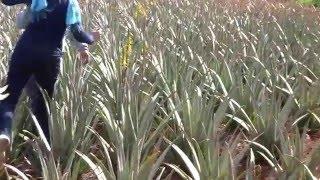 εντυπώσεις - Karin Dückelmann θερίζει ένα φύλλο Aloe Vera!