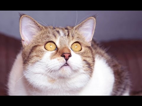 cute cats - Too Cute moments of Funny Cat Rocky life . Today cat Rocky celebrates his second birthday. SUBSCRIBE: http://bit.ly/FunnyCatsAndNiceFish . New video every Tuesday & Friday! Like us on FACEBOOK:...