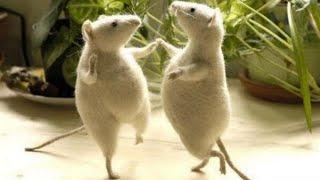 Animales bailando. Que bailan. Videos de música y baile de animalitos. Reggaeton Cumbia Chachacha.