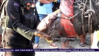 Video Bom Perang Dunia Ditemukan di Tarakan Kalimantan Utara - NET 12 MP3, 3GP, MP4, WEBM, AVI, FLV Oktober 2018