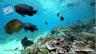 Nov 17, 2015 ... Norfolk Island Snorkeling in Emily Bay. Norfolk Island ... Norfolk Island: nrecolonisation causes resident rebellion - The Feed - Duration: 13:45.