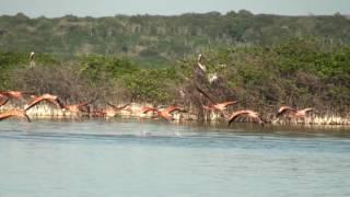 Bahía de Las Águilas intocable