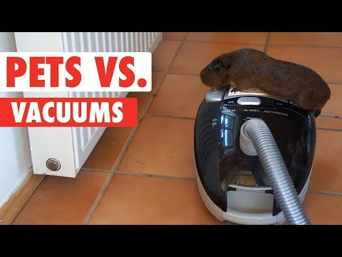 Pets Versus Vacuums: Who Will Come out on Top?