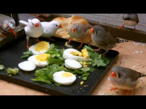 Finch Salad