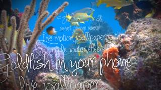 Goldfish In Your Phone LWP YouTube video