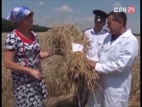 Государственный контроль сортовых качеств посевов