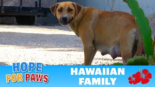 We were told this homeless dog had 4 puppies - we found more!!!  :-) by Hope For Paws