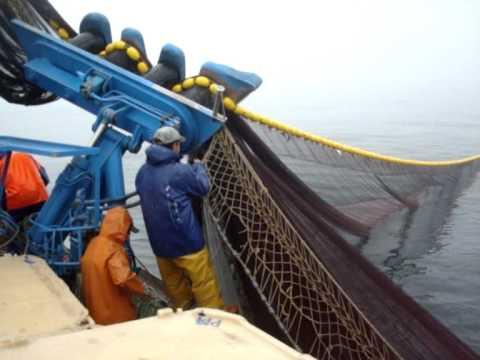 pesca da sardinha na traineira princesa do mondego