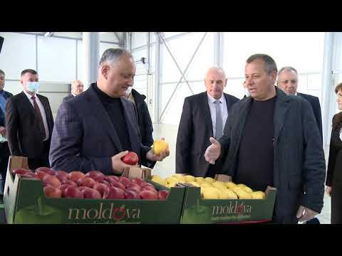 Глава государства ознакомился с деятельностью двух предприятий из Бричанского района