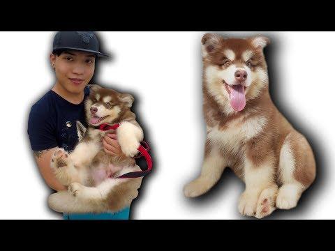 NTN - Cún Con Alaska Về Với Đội NTN Vlogs ( Lovely Dog ) (видео)