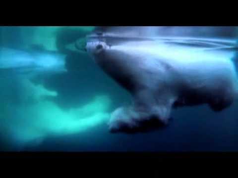 L'OURS BLANC.wmv (видео)