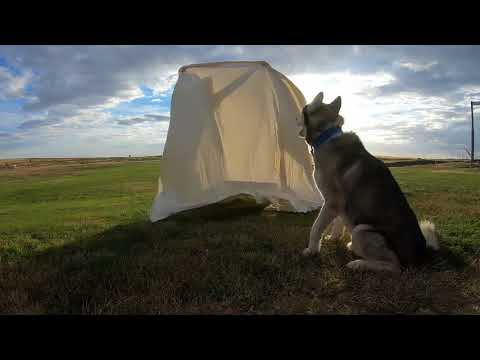 Temppu koiralle