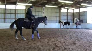 Maia the Mare becoming Extraordinaire