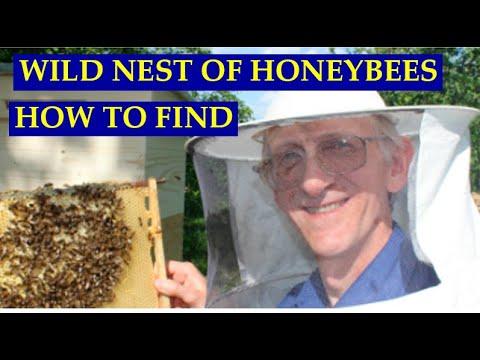 дикие пчелы видео-ру1