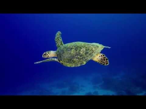 Beneath the Sea Surface