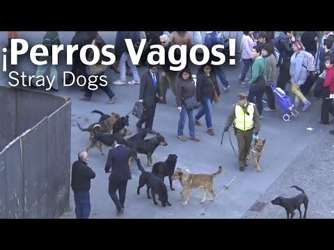 PERROS DE ATAQUE - Daily Observations - Ataque de Perros Vagos a Carabinero - Stray Dogs Attack to Policeman Read more on Stray Dogs in LatinAmerica: http://southernpacificrevi...