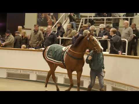 Juddmonte Draft Lights Up Day 3 of December Mares Sale