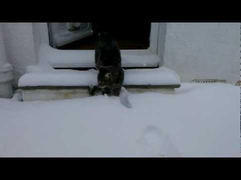 Cat meets snow