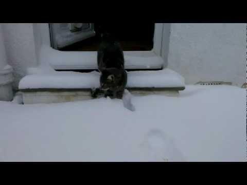 Katt möter snö för första gången