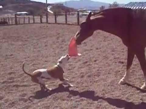 un cane si avvicina al cavallo con un cono in bocca: guardate che accade