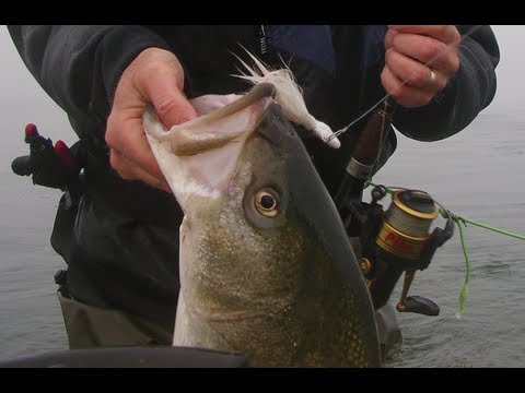 How-to Catch Striped Bass Using Bucktails – Part 1
