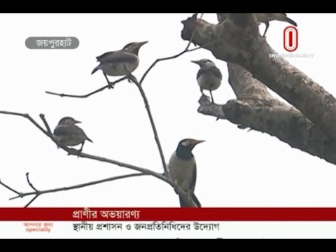 Free animals getting foods (16-06-2019) Courtesy: Independent TV