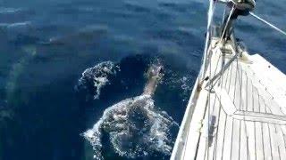Delfin Watching