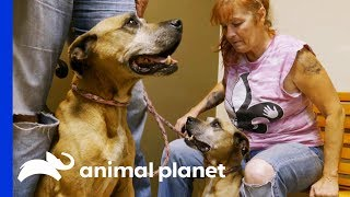 A Call to Tia May Have Saved This Rescue Dog's Life   Pit Bulls & Parolees by Animal Planet