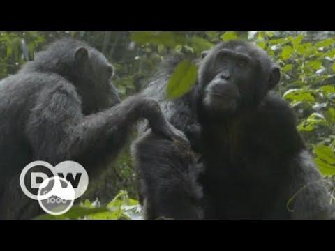 Uganda: Die Flussretter vom Mpanga | DW Deutsch