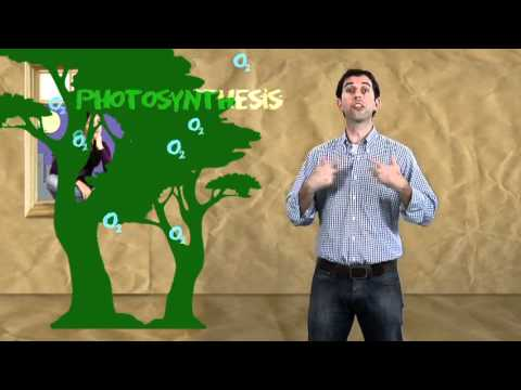 Greenhouse effect, the carbon cycle and climate change
