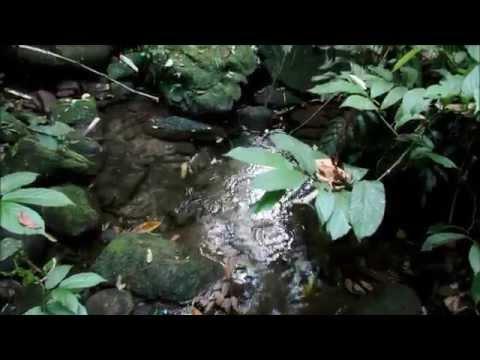 Acampamento em Reserva Particular em Caxias - RJ - Vídeos