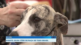 Evento em Bauru julga cerca de 200 cachorros de raça de todo o Brasil
